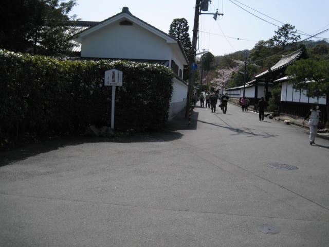 13-sakura-kyoto20.JPG