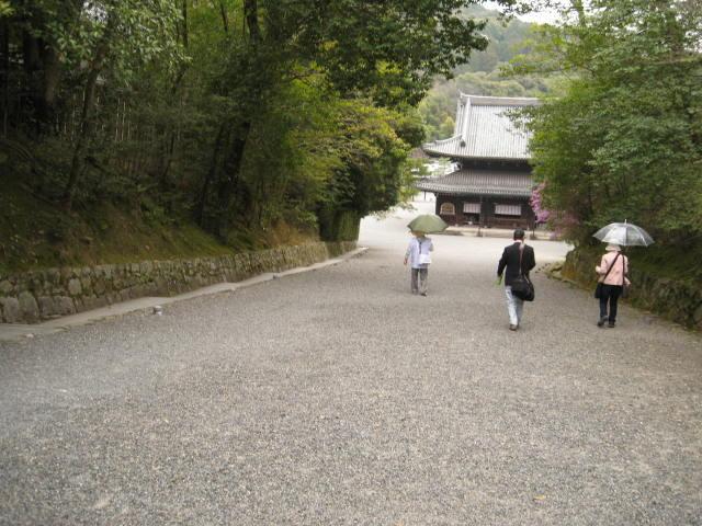 13-sakura-kyoto210.JPG