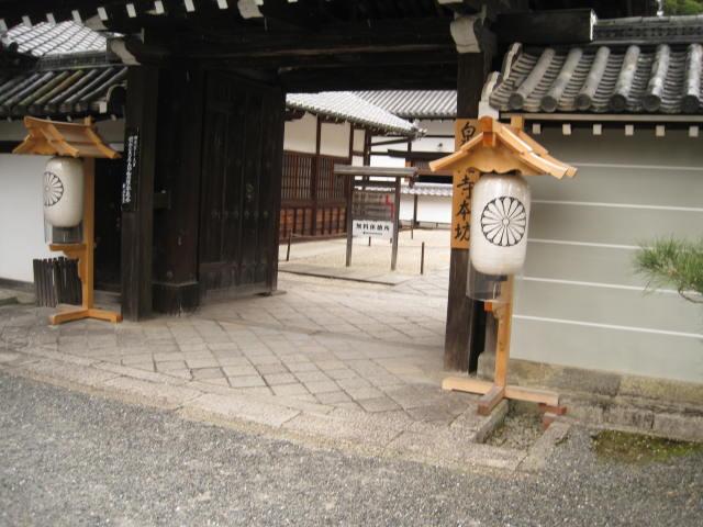 13-sakura-kyoto214.JPG