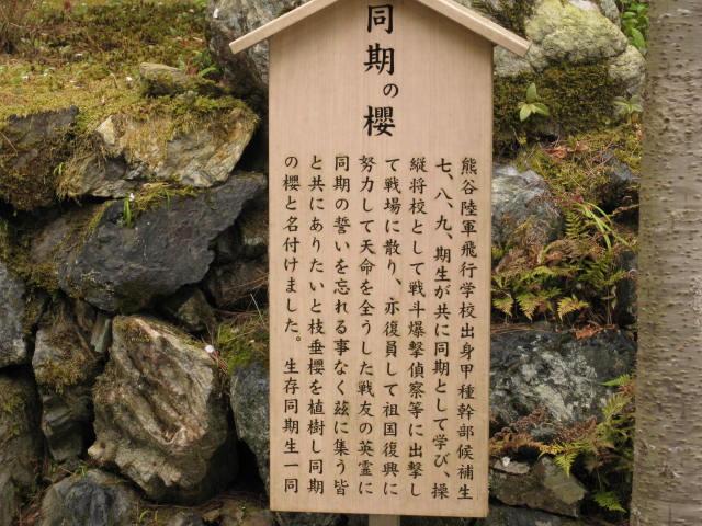 13-sakura-kyoto232.JPG