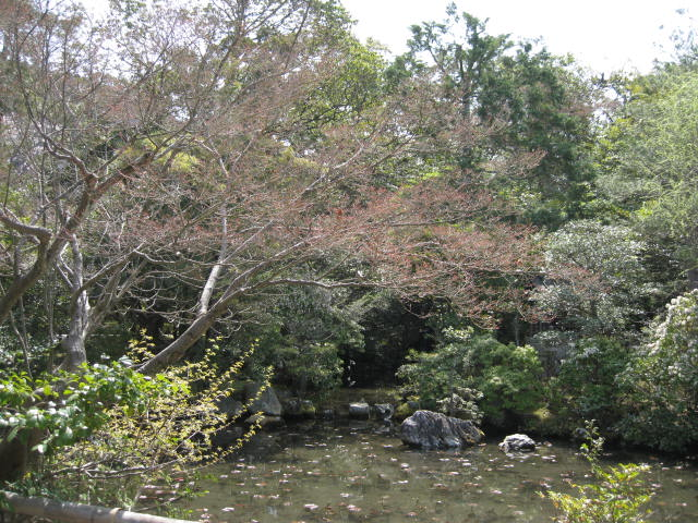 13-sakura-kyoto25.JPG