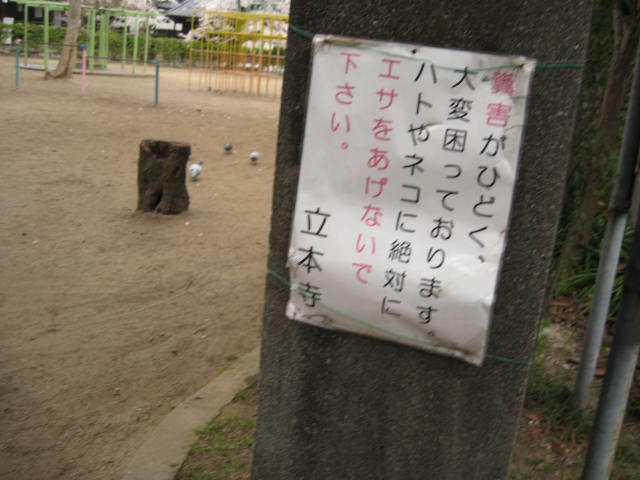13-sakura-kyoto274.JPG