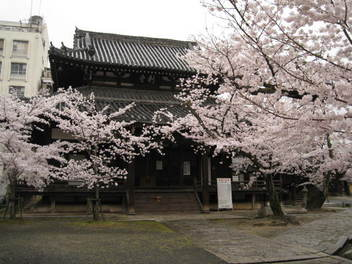 13-sakura-kyoto276.JPG