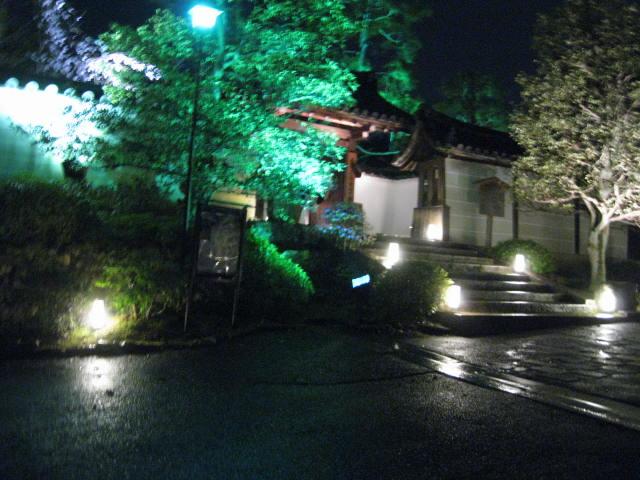 13-sakura-kyoto297.JPG