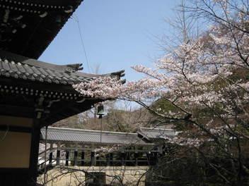13-sakura-kyoto36.JPG