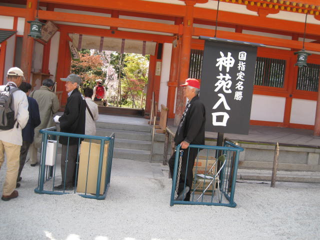 13-sakura-kyoto378.JPG