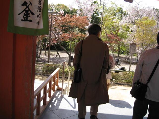 13-sakura-kyoto379.JPG