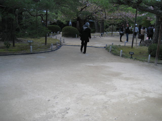 13-sakura-kyoto385.JPG