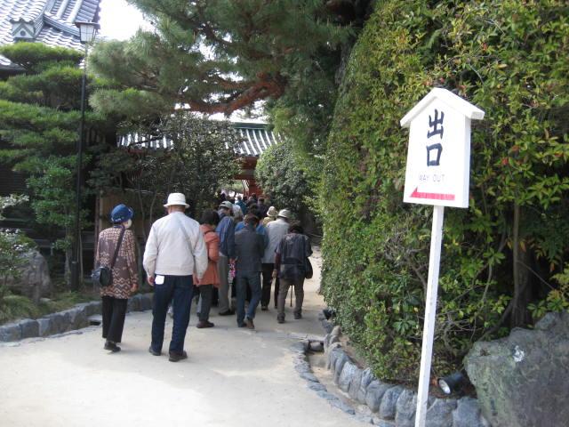 13-sakura-kyoto386.JPG