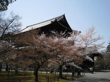 13-sakura-kyoto39.JPG