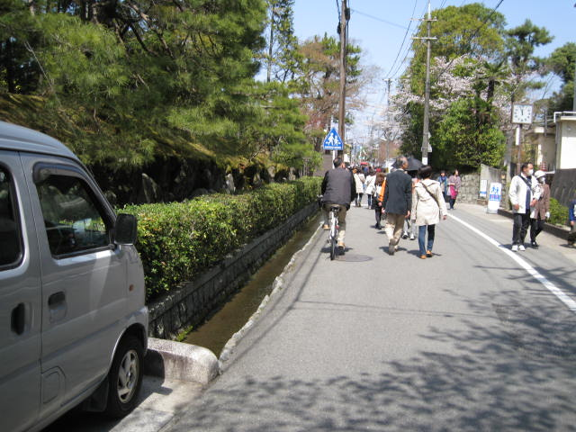13-sakura-kyoto43.JPG