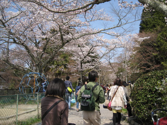 13-sakura-kyoto49.JPG