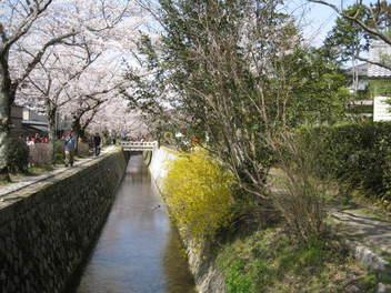 13-sakura-kyoto51.JPG