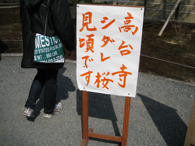 13-sakura-kyoto72.JPG