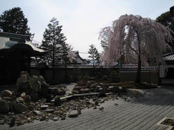 13-sakura-kyoto78.JPG