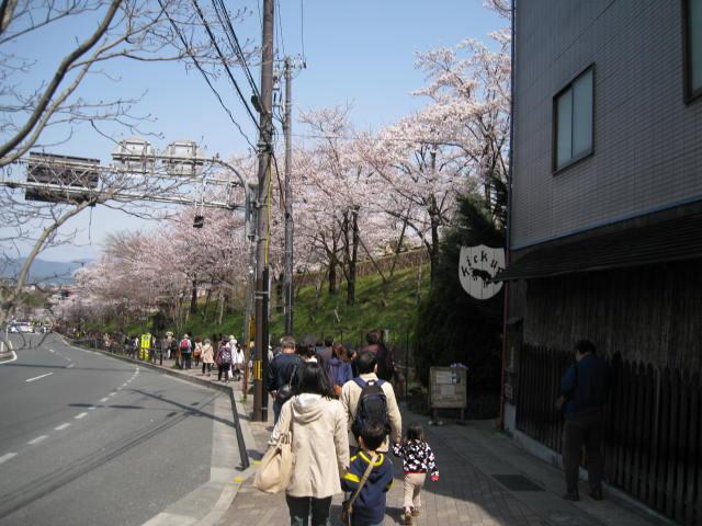 13-sakura-kyoto9.JPG