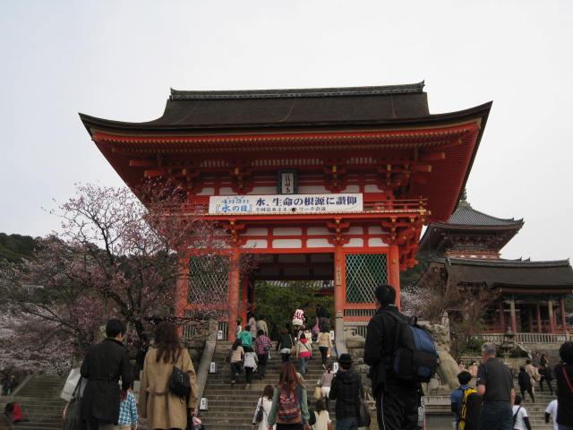 13-sakura-kyoto98.JPG