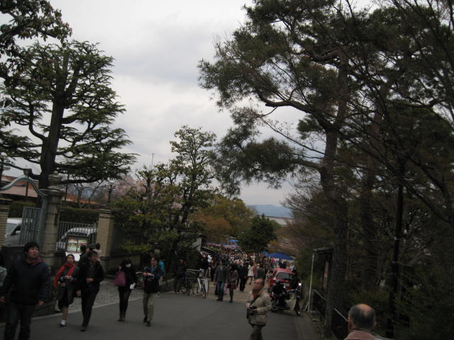 14-sakura-kyoto10.JPG