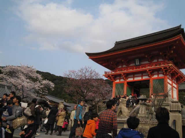 14-sakura-kyoto3.JPG