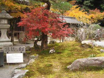 15-koyo-kyoto18.JPG