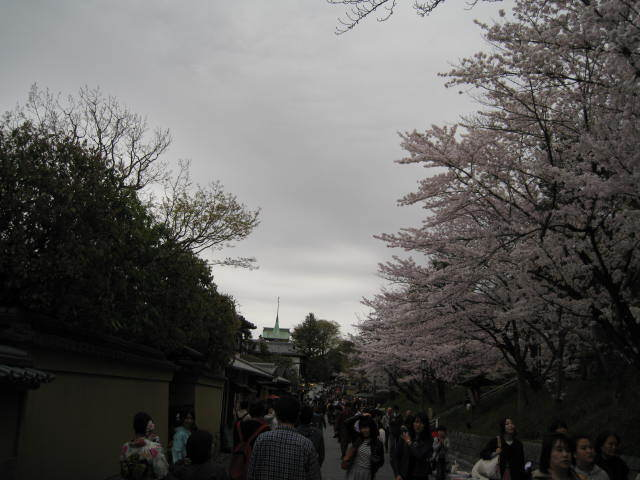 15-sakura-kyoto10.JPG