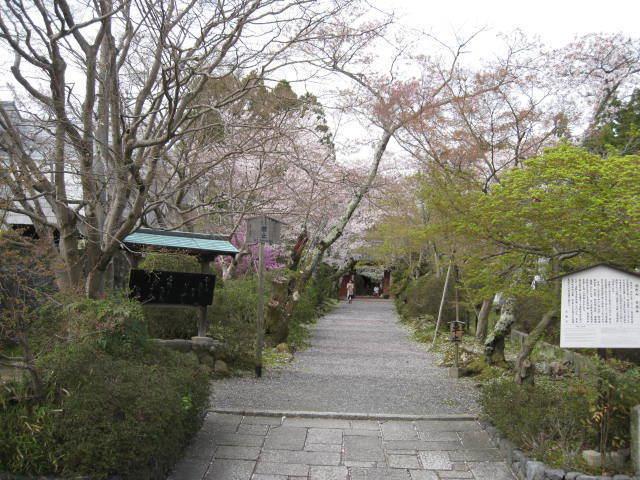 15-sakura-kyoto30.JPG