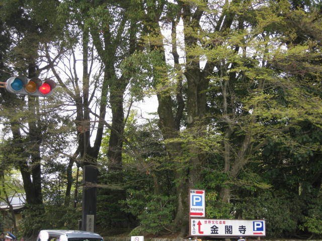 15-sakura-kyoto37.JPG