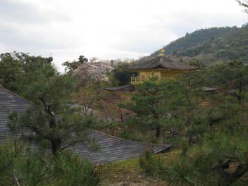 15-sakura-kyoto42.JPG