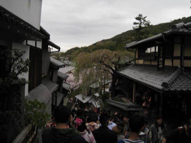 15-sakura-kyoto9.JPG