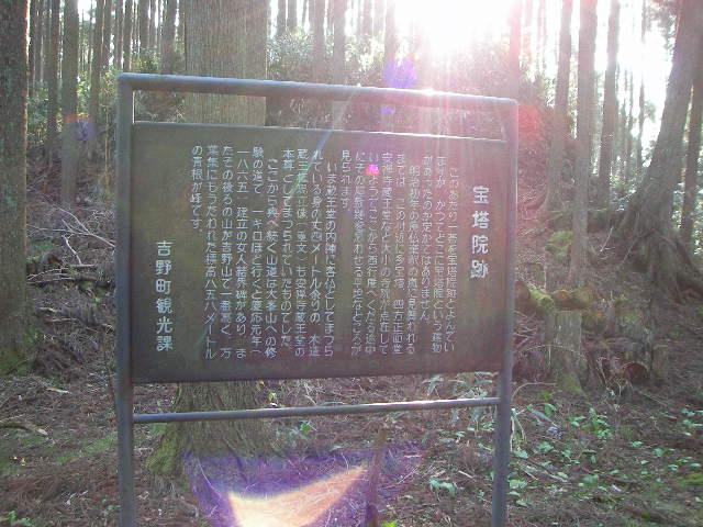 2008-yoshino-sakura14.JPG