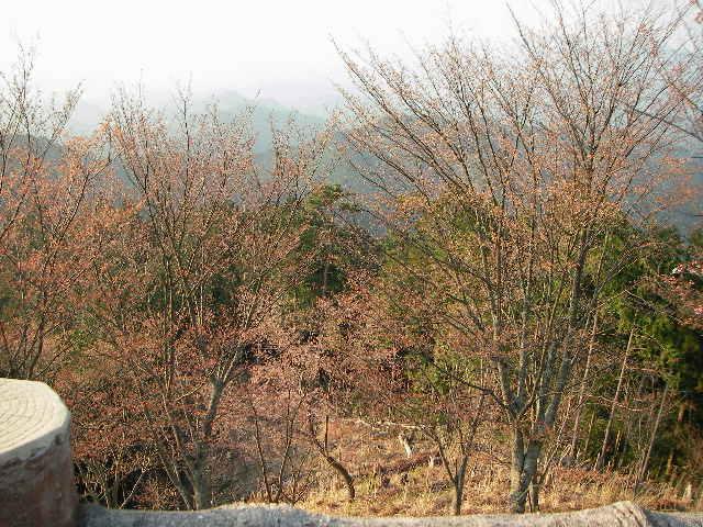 2008-yoshino-sakura21.JPG