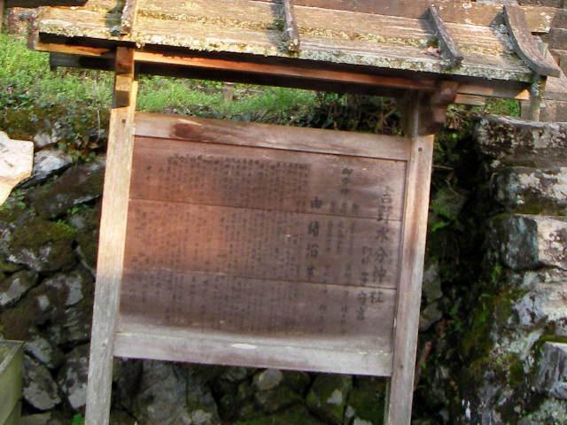 2008-yoshino-sakura27.JPG