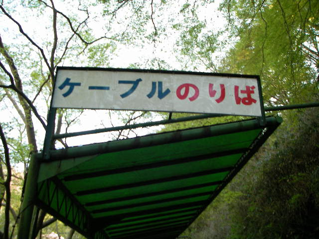 2008-yoshino-sakura3.JPG