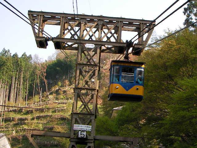 2008-yoshino-sakura4.JPG