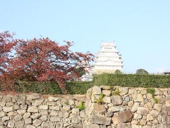 2014-koyo-himejijyo1.JPG