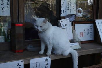 21-umemiya-cat1.JPG