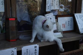 21-umemiya-cat2.JPG