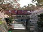 syukugawa-2006sakura-31.JPG