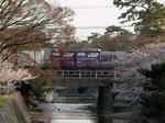 syukugawa-2006sakura-32.JPG