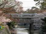 syukugawa-2006sakura-33.JPG