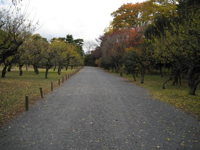10-koyo-kyoto217.JPG