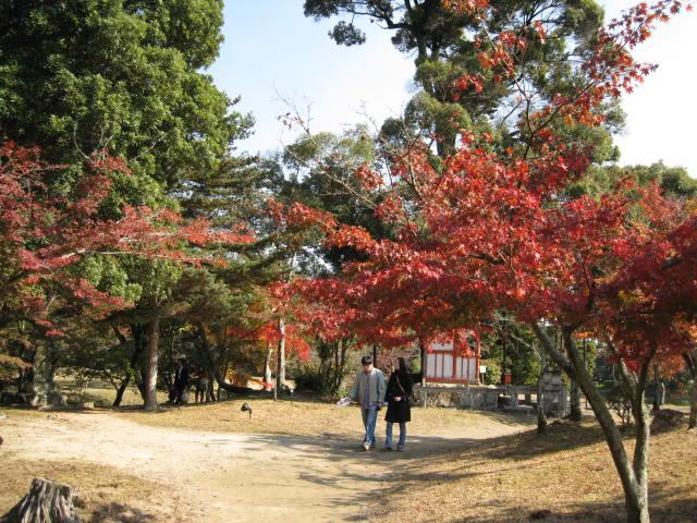 10-koyo-kyoto33.JPG