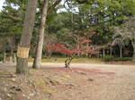 10-koyo-kyoto487.JPG