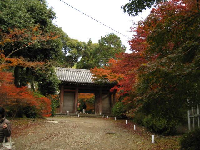 10-koyo-kyoto492.JPG