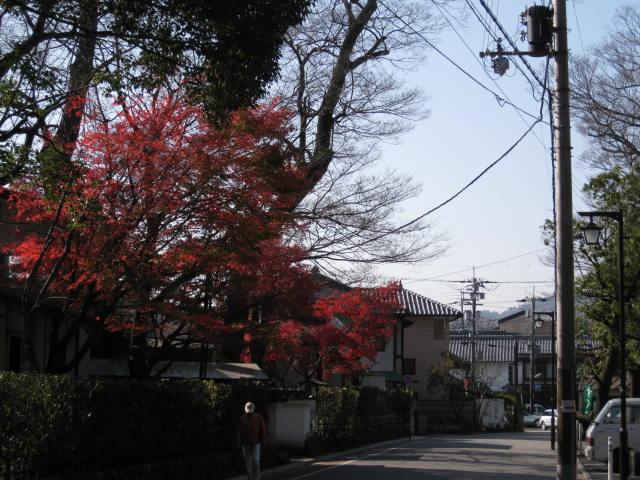 10-koyo-kyoto797.JPG