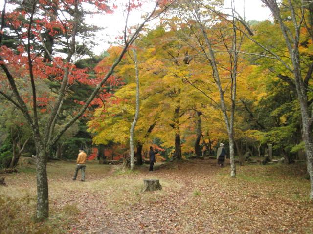 10-koyo-yoshino65.JPG