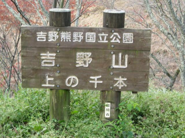 10-koyo-yoshino98.JPG
