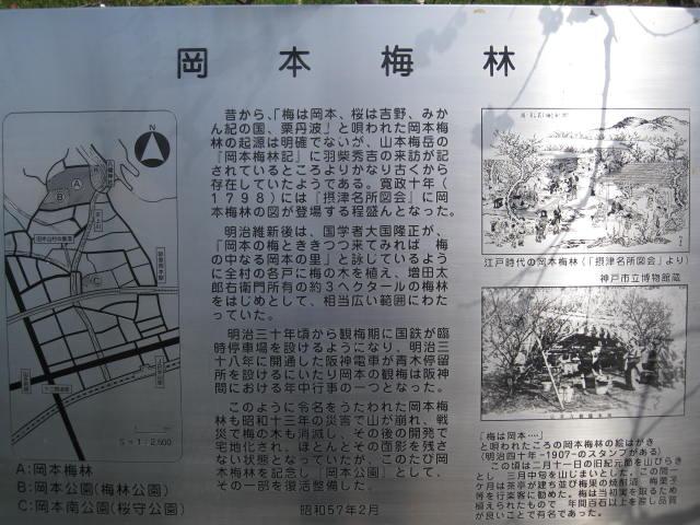11-ume-okamotokouen8.JPG