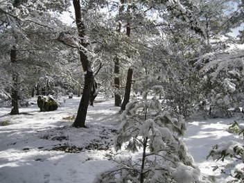 12-snow-kyoto25.JPG